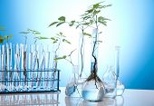 Plants in test tubes in  laboratory