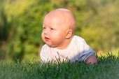 The Baby Lies Or Crawls On The Green Lawn At Sunset And Looks Into The Distance. Emotions Baby. Vaca poster