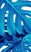 Blue White Indigo Tropical Texture Green Leaves Pattern Background Natural Fine Art Postcard Fresh S poster
