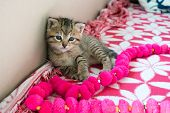 Striped Tiger Kitten On The Blanket, 3 Weeks Cute Small Kitty With Blue Eyes poster