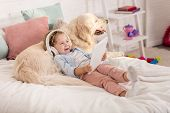 Smiling Adorable Child Listening Music With Tablet And Leaning On Golden Retriever On Bed In Childre poster