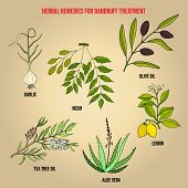 Best Herbs For Dandruff Treatment. Hand Drawn Set Of Medicinal Herbs poster