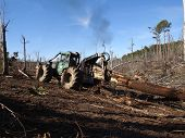 picture of skidder  - A logging skidder works in a pine forest - JPG