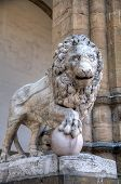 Sculpture of Lion with ball at the Loggia of Lanzi. Florence, Italy