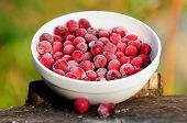 image of bearberry  - A bowl of large frozen cranberries on a tree stump