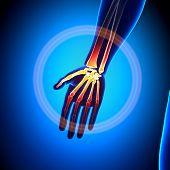 Anatomia - Anatomia ossos da palma