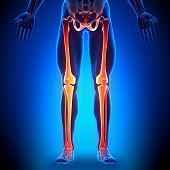 Pernas - anatomia ossos