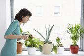 Young businesswoman sprays plants in flowerpots by window