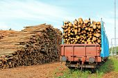 picture of freightliner  - Storage of wood at railway station and rail cars full of wood ready for transport - JPG