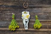 foto of cranium  - fresh medical herbs tutsan bunches and horse cranium with horseshoe on old wooden farm wall - JPG