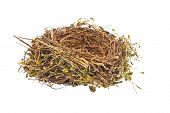 the empty nest of a bird. empty bird's nest. symbol image for building savings and construction