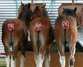 Three Horses With Bows On