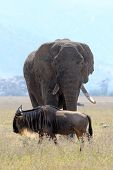 African Elephant And Wildebeest