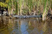 In The Everglades