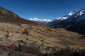 Fields and grazing yaks near Manang, village situated in high altitude