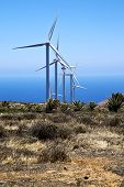 Africa Wind Turbines The Isle Of Lanzarote Spain