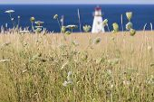 Cape Tryon Lighthouse, Prince Edward Island and grain field.  Viewed through Queen Anne's Lace.