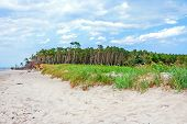 stock photo of windswept  - Darss Weststrand beach grassland with the typical windswept trees - JPG