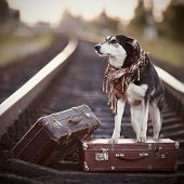 foto of dog-house  - Dog on rails with suitcases - JPG