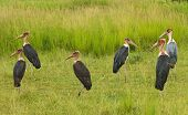 Creepy Storks