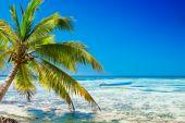 Palm On White Sand Beach Near Cyan Ocean