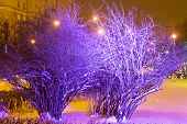 Blue Trees In Winter