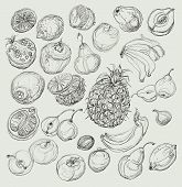 Set of fruits. Freehand drawing.