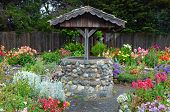 Wishing Well In Dahlia Garden