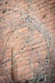 Barb Wire With Red Brick Wall In Background