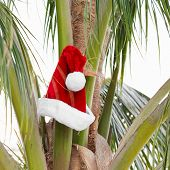 Santa Claus Hat On Coconut Palm Tree