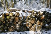 Stacked Tree Wood Logs At Winter Forest