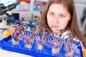 foto of modifier  - woman study of genetic modified GMO plants in the laboratory - JPG