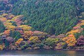 Beautiful Landscape Of Autumn Leaves Colors.