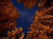 Big Dipper Visible Through Orange Lit Trees