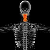 3D Render Medical Illustration Of The Neck Bone