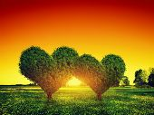 stock photo of tree leaves  - Heart shape trees couple on green grass field landscape at sunset - JPG