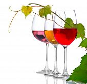 Wine. Three Glasses of wine isolated on white background. Glass of rose, red and white wine decorated with grape leaves. Vine leaf