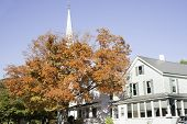 White church and golden tree.