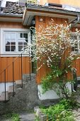 Small house and tree with white flowers