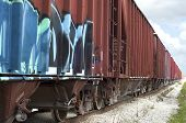 Train Rail Cars with graffiti