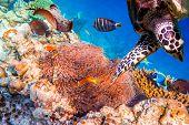 image of saltwater fish  - Topical saltwater fish  - JPG