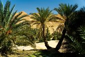 Oasis With Two Palm Trees In Front