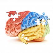 image of temporal lobe  - Colored sections of the human brain in the form of puzzle pieces - JPG