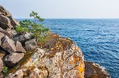 stock photo of lonely  - Lone pine tree on a cliff by the sea - JPG