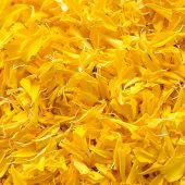 foto of marigold  - The yellow flower marigold multi petal background - JPG
