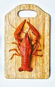 image of craw  - the red lobster on a cutting board - JPG