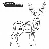 image of deer meat  - Deer meat cuts with elements and names - JPG