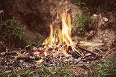 pic of bonfire  - Evening camping bonfire close - JPG