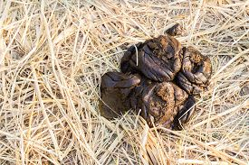 stock photo of feces  - fresh cow feces on dried rice paddy field - JPG