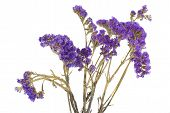 foto of flower arrangement  - Dried purple flowers isolated on the white - JPG
